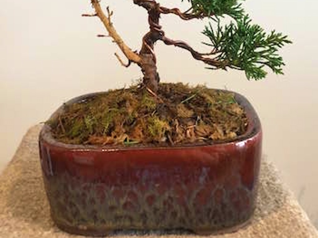 Introduction To Bonsai Wiring Lesson
