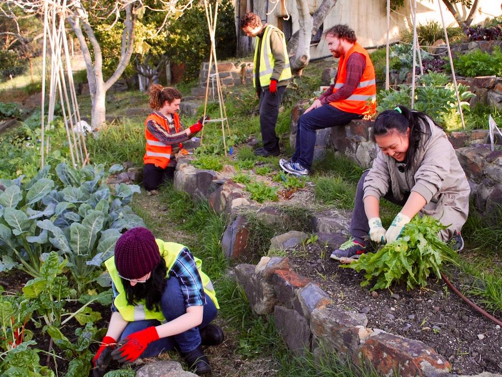 VET Horticulture Programs