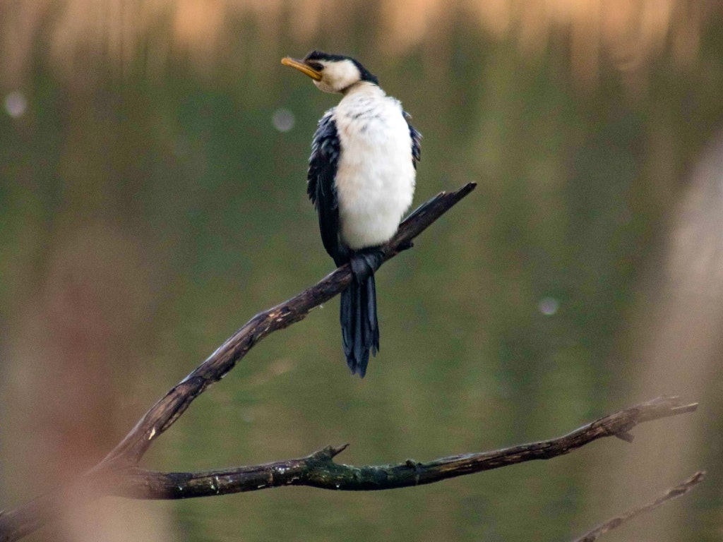 Julie Abreu Photography birdsland-14