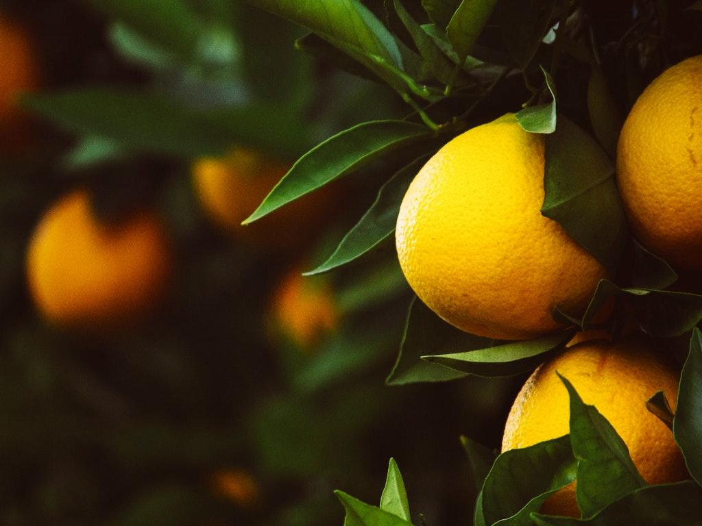 tangerines-1208301_1920