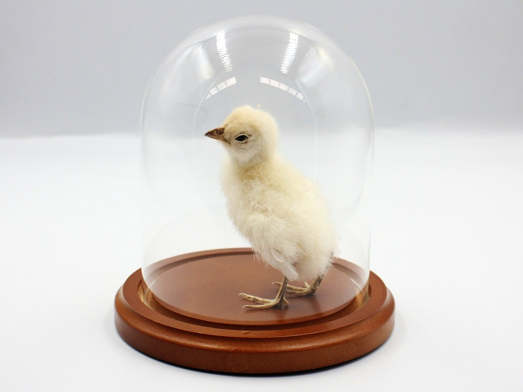 Baby Chick Workshop (1)