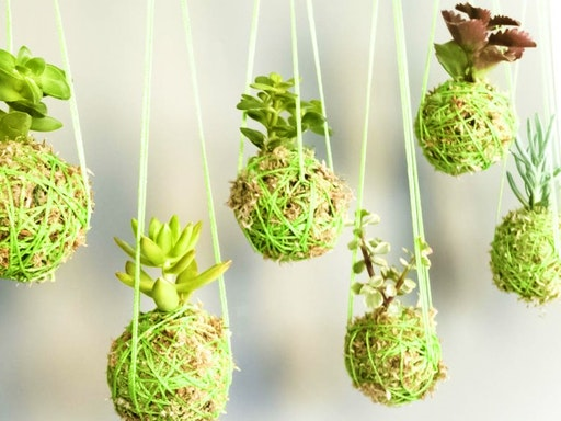 Make a Hanging String Succulent Garden with My Flower House (Photo Credit to Balcony Garden)