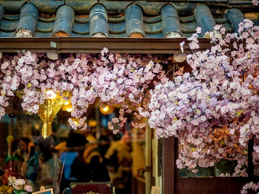 Tokyo Blooms